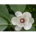 Magnolia - Esencia...
