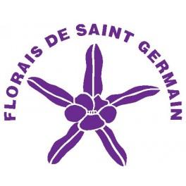 Esencia de Boa Deusa 10ml - Modulo II - Saint Germain