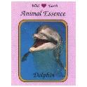 Wild Earth Animal Essences....